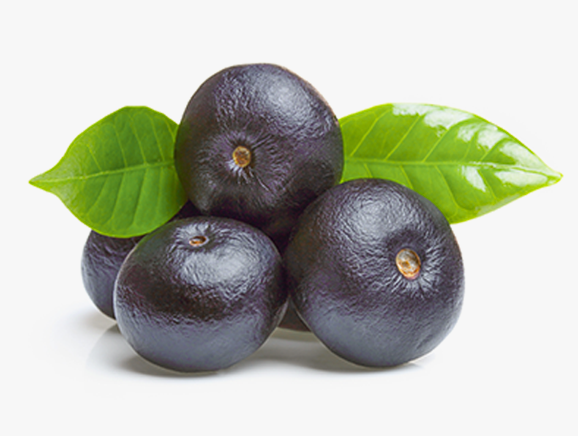 Acai from Brazil - YourSuperFoods Ingredient