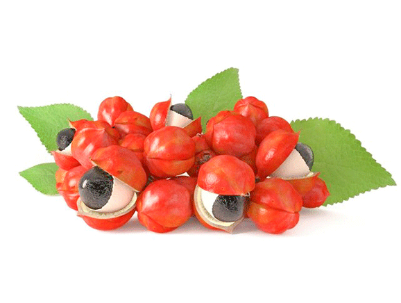 Guarana from Brazil - YourSuperFoods Ingredient