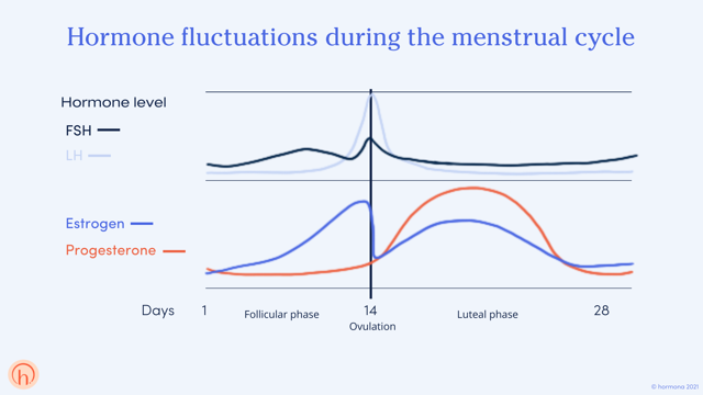Hormone fluctuations during the menstrual cycle