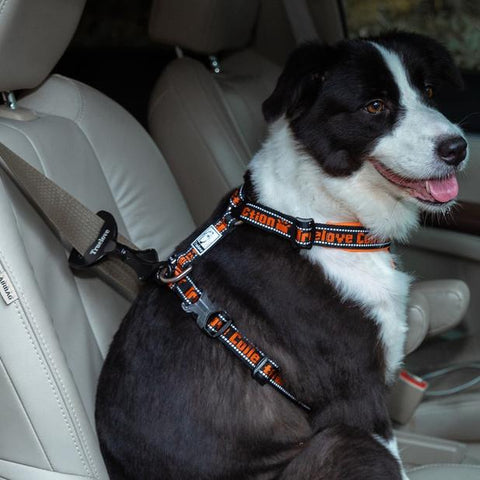 Introducing our safety dog travel buckle. Best safety measure for your dog.