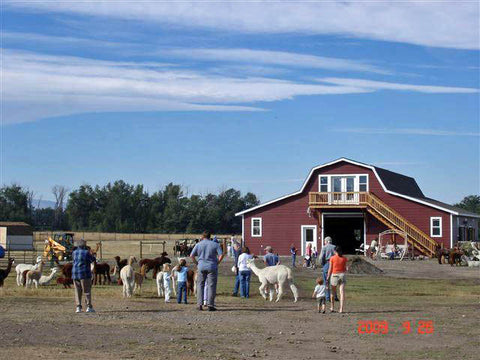 Alpaca Open House