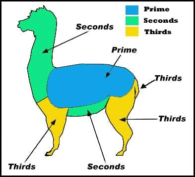 Alpacas shearing facts and figures
