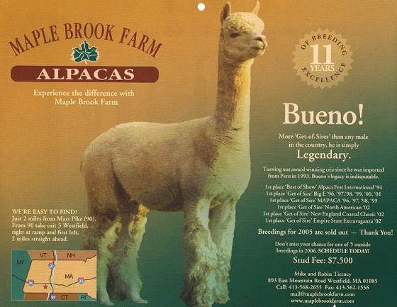 100% Peruvian Rose Grey herdsire out of the famous Peruvian Bueno.