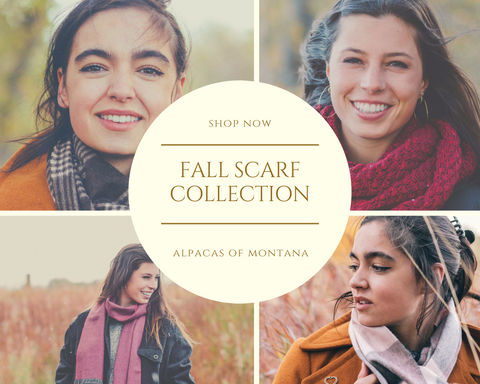 alpaca fall collection