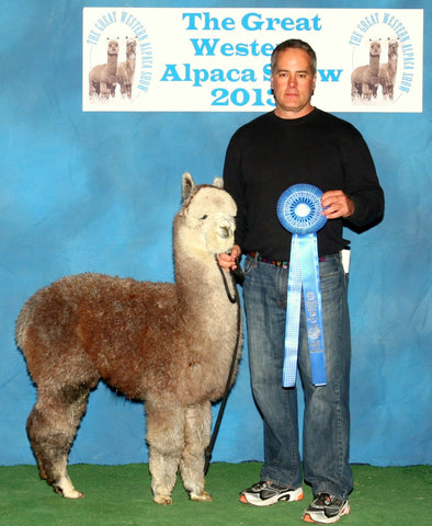 Grey Junior Alpaca Herdsire