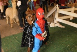 alpaca and boy dressed up in spiderman costume