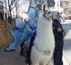 llama in a costume with fairy wings