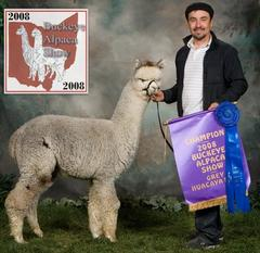 silver gray alpaca argus winning national competition