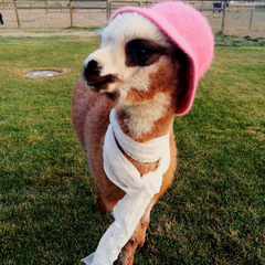 baby alpaca wearing a hat and a scarf