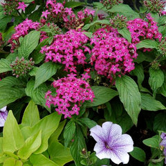 Purple and pink flowers with green leaves in a garden