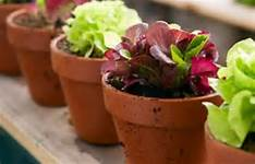 potted plants in brown flower pots