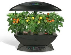 hydroponically grown tomato plants with red tomatoes