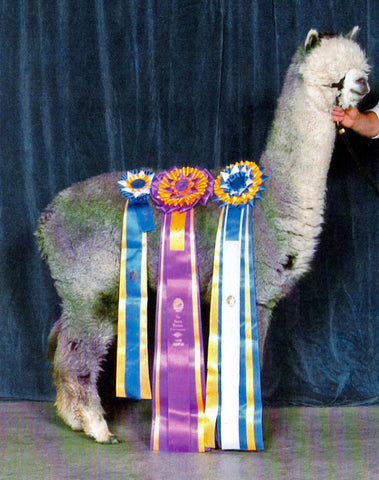 Snowmass Sterling Silver - Herdsire