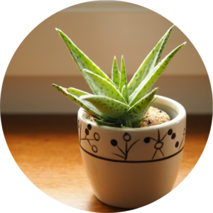 Aloe vera in a contemporary white and black white is placed on a window sill to help boost the plant owners mood.