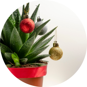 A succulent is decorated with red, gold, and silver holiday ornaments for Christmas.