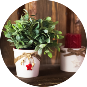 Indoor plant gift is potted inside a white planter with twine and a red ceramic star.