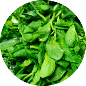Leafy green spinach that is full of calcium as well as other nutrients.