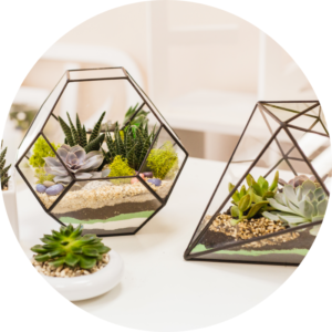 Geometric glass terrariums contain small succulents and reindeer moss as they decorate an apartment countertop.