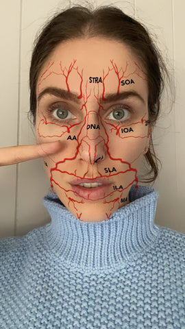Cassandra Bankson diagram of blood vessels throughout the face