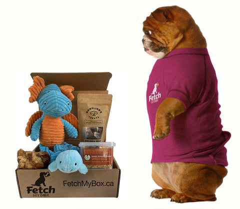 Fetch My Box subscription box for your dog - Your box arrives and the fun begins!
