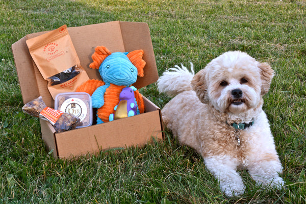 Fetch My Box is a Monthly Dog Box Subscription Service