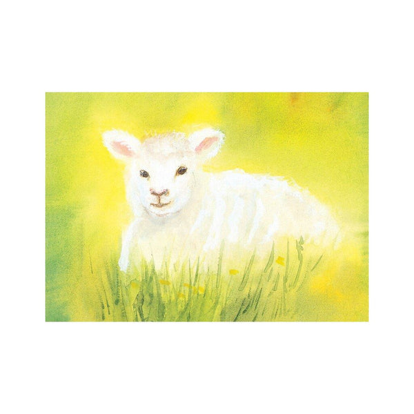 The white lamb postcard