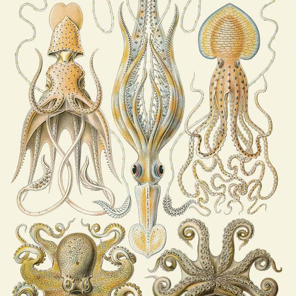 Yellow Octopus Haeckel Print