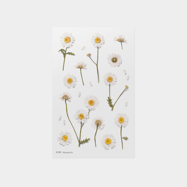 Appree Marguerite Pressed Flower Sticker