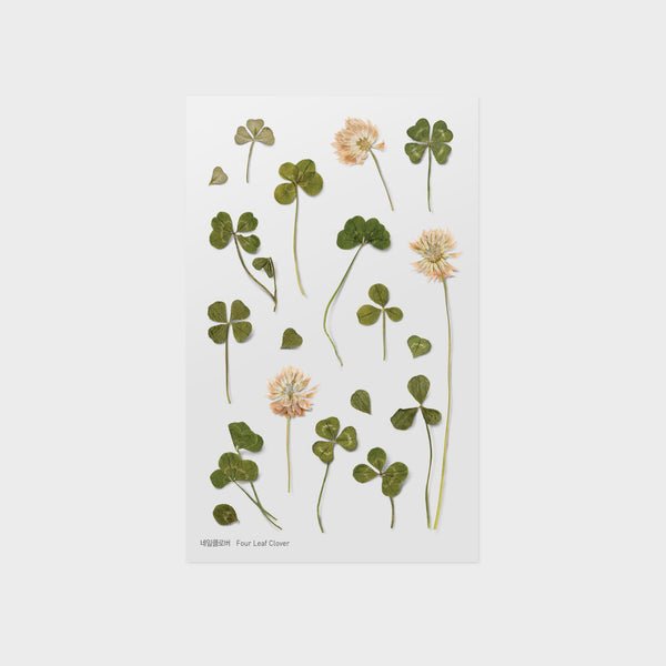 Four Leaf Clover Pressed Flower Sticker