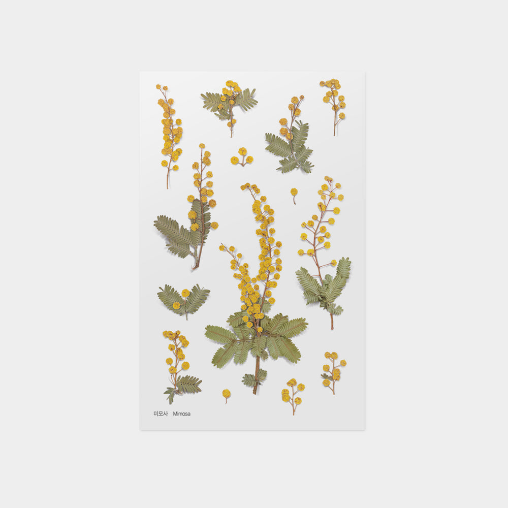 Appree Mimosa Pressed Flower Sticker