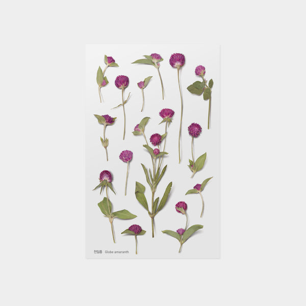 Appree Globe Amaranth Pressed Flower Sticker