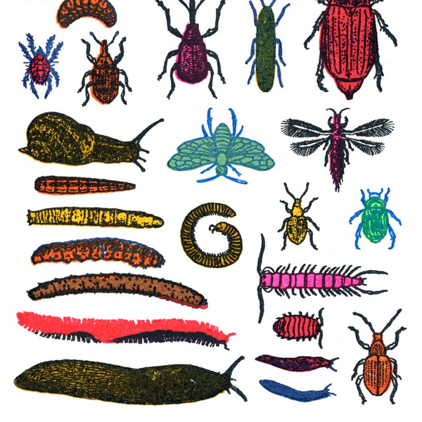 Garden Pests mini screen print