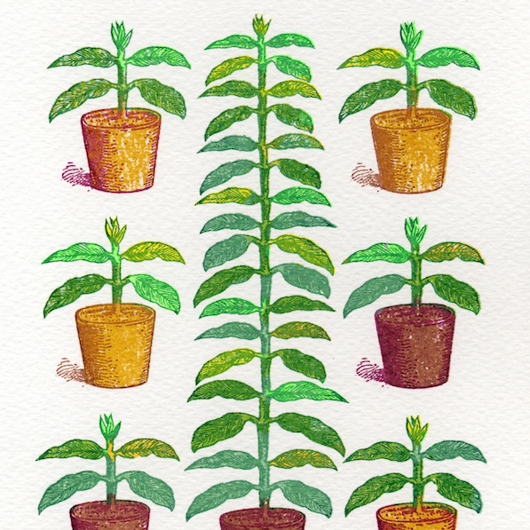 House Plants mini screen print