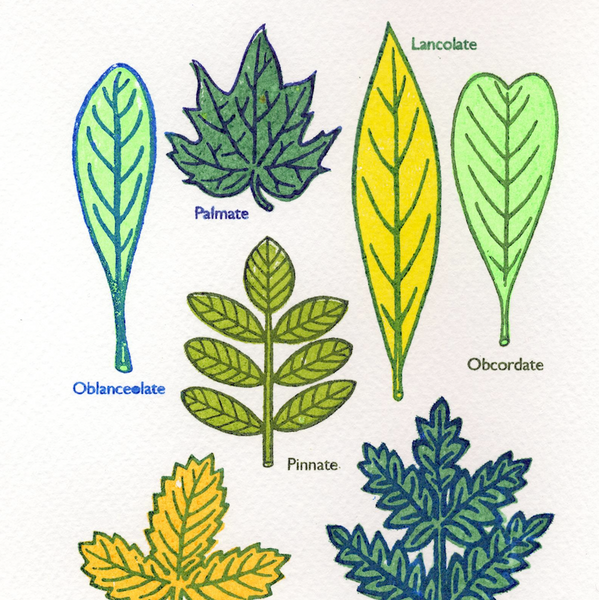 Some Kinds Of Leaves mini screen print