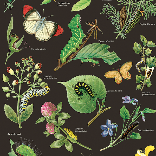Caterpillars & Butterflies Wrapping Paper (Click-and-Collect only)