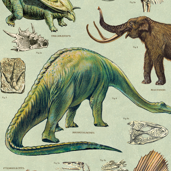Dinosaurs Wrapping Paper (Click-and-Collect only)
