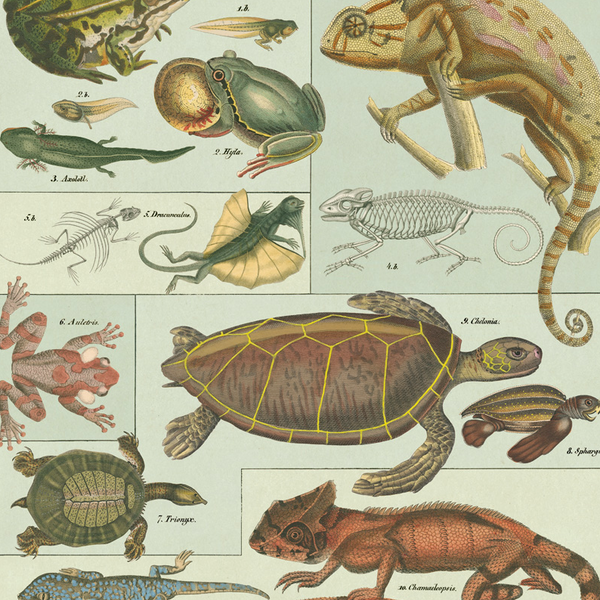 Reptiles & Amphibians Wrapping Paper (Click-and-Collect only)