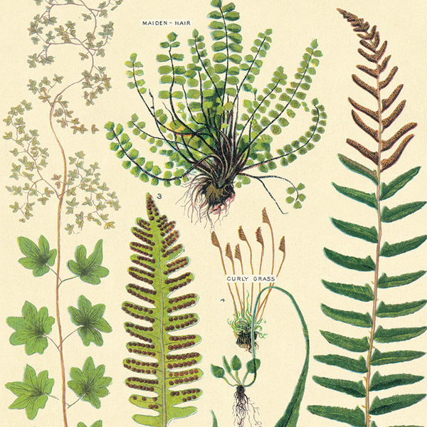 Fern Wrapping Paper (Click-and-Collect only)