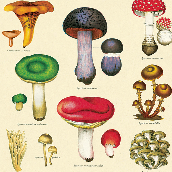 Mushrooms Wrapping Paper (Click-and-Collect only)