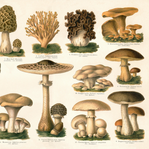 Brown Mushrooms Encyclopedia Print