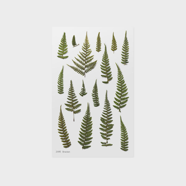 Bracken Pressed Flower Sticker