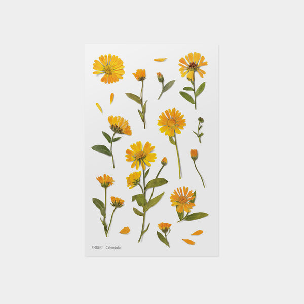 Calendula Pressed Flower Sticker