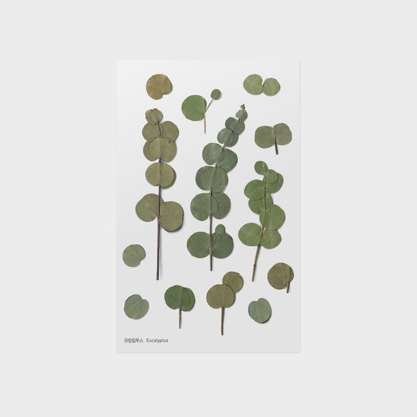 Eucalyptus Pressed Flower Sticker