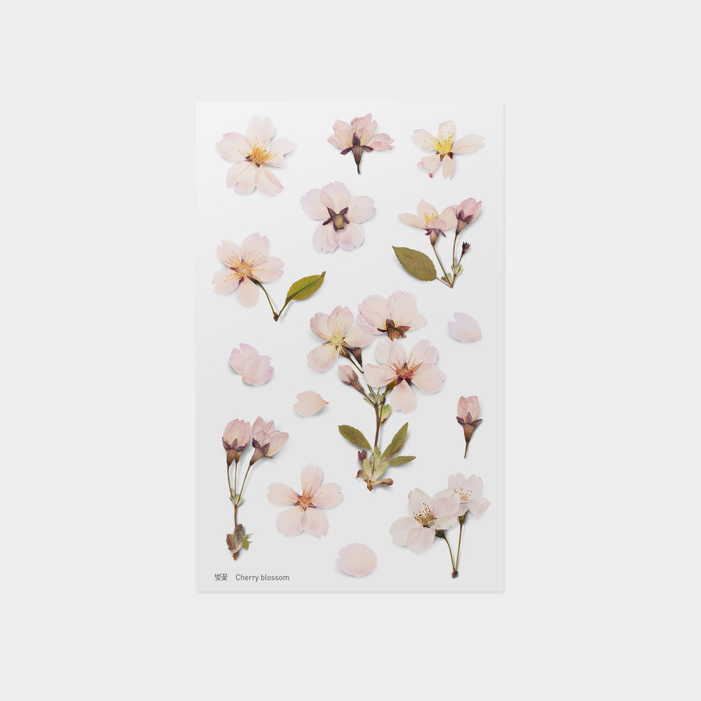 Appree Cherry Blossom Pressed Flower Sticker