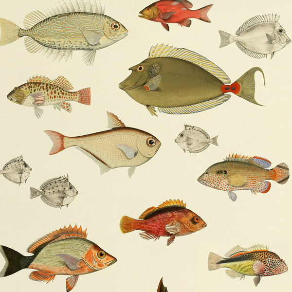 Fishes Print