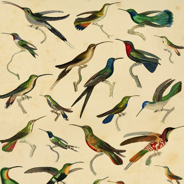 Hummingbirds Print
