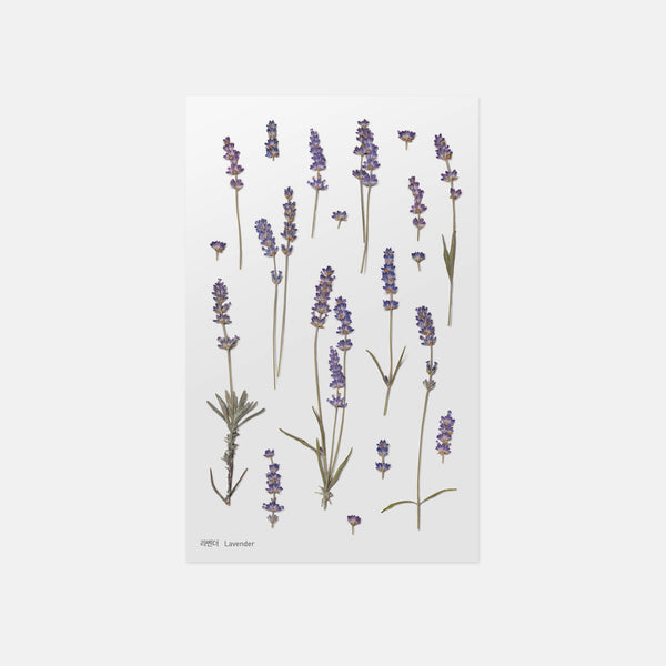 Lavender Pressed Flower Sticker