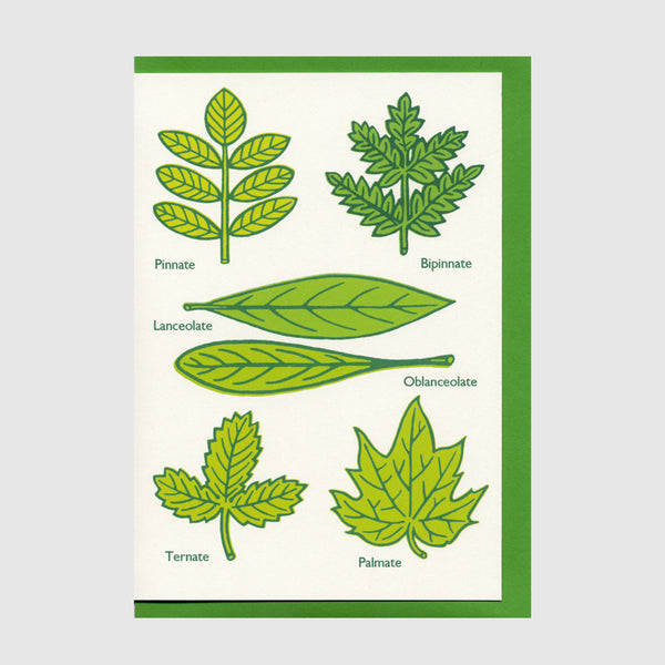 Some Kinds of Leaves Greetings Card