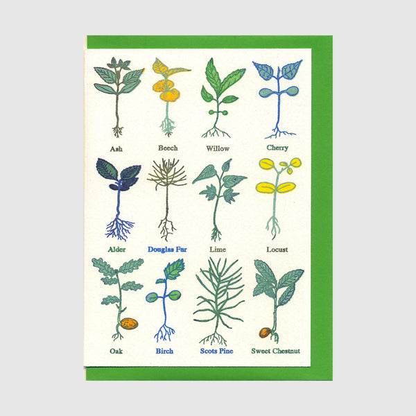 Tree Seedlings Greetings Card