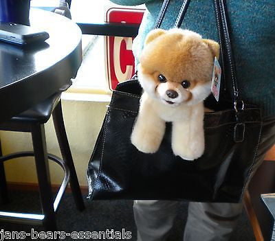 Gund - Boo, the Worlds Cutest Dog - 8""